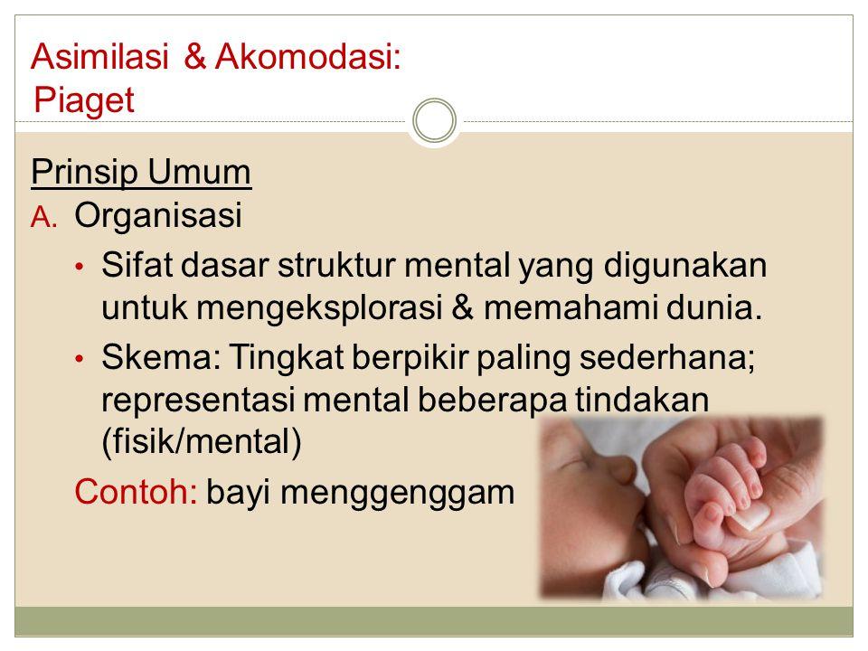Asimilasi & Akomodasi: Piaget Prinsip Umum A. Organisasi Sifat dasar struktur mental yang digunakan untuk mengeksplorasi & memahami dunia. Skema: Ting
