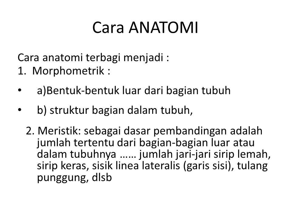 Cara ANATOMI Cara anatomi terbagi menjadi : 1. Morphometrik : a)Bentuk-bentuk luar dari bagian tubuh b) struktur bagian dalam tubuh, 2. Meristik: seba