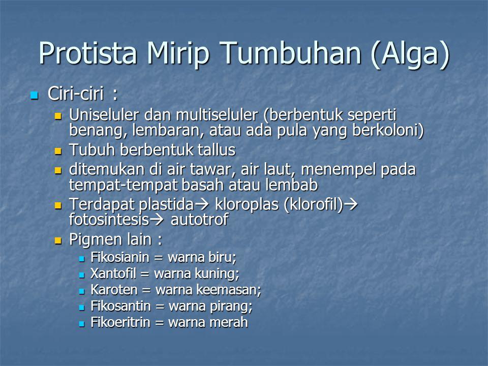 Protista Mirip Tumbuhan (Alga) Ciri-ciri : Ciri-ciri : Uniseluler dan multiseluler (berbentuk seperti benang, lembaran, atau ada pula yang berkoloni)