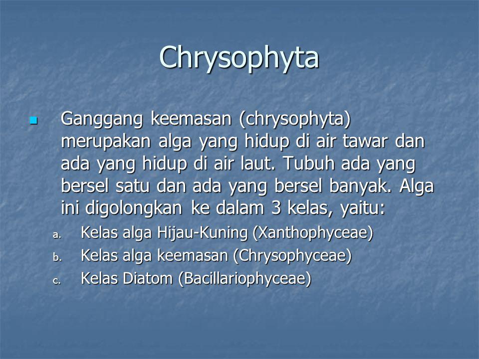 Chrysophyta Ganggang keemasan (chrysophyta) merupakan alga yang hidup di air tawar dan ada yang hidup di air laut. Tubuh ada yang bersel satu dan ada