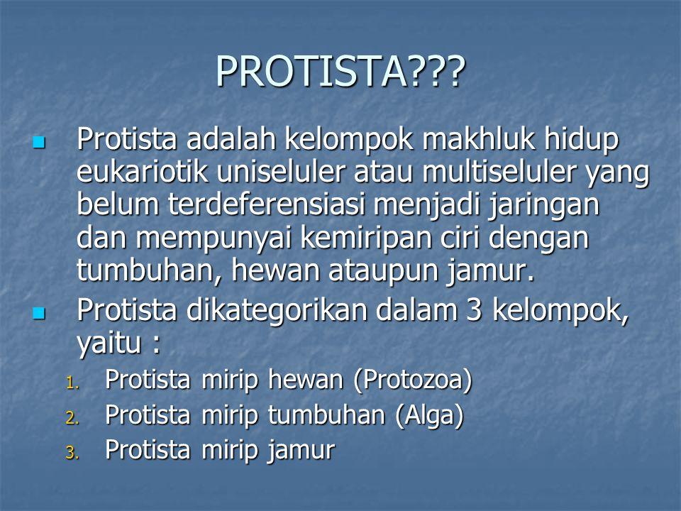 PROTISTA??? Protista adalah kelompok makhluk hidup eukariotik uniseluler atau multiseluler yang belum terdeferensiasi menjadi jaringan dan mempunyai k