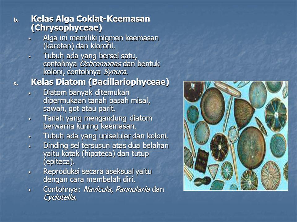 b. Kelas Alga Coklat-Keemasan (Chrysophyceae) Alga ini memiliki pigmen keemasan (karoten) dan klorofil. Alga ini memiliki pigmen keemasan (karoten) da