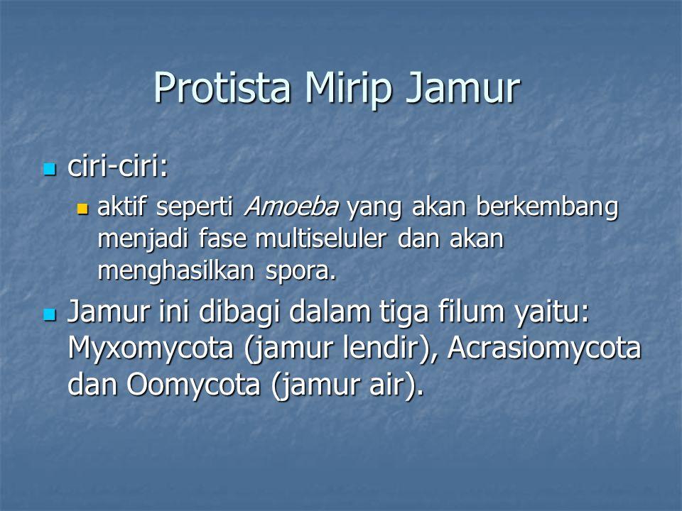 Protista Mirip Jamur ciri-ciri: ciri-ciri: aktif seperti Amoeba yang akan berkembang menjadi fase multiseluler dan akan menghasilkan spora. aktif sepe