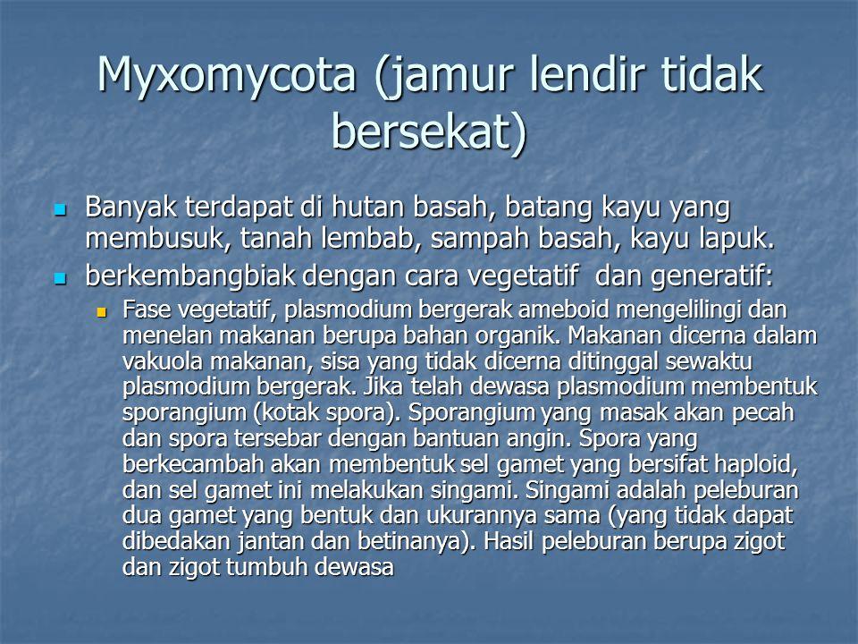 Myxomycota (jamur lendir tidak bersekat) Banyak terdapat di hutan basah, batang kayu yang membusuk, tanah lembab, sampah basah, kayu lapuk. Banyak ter