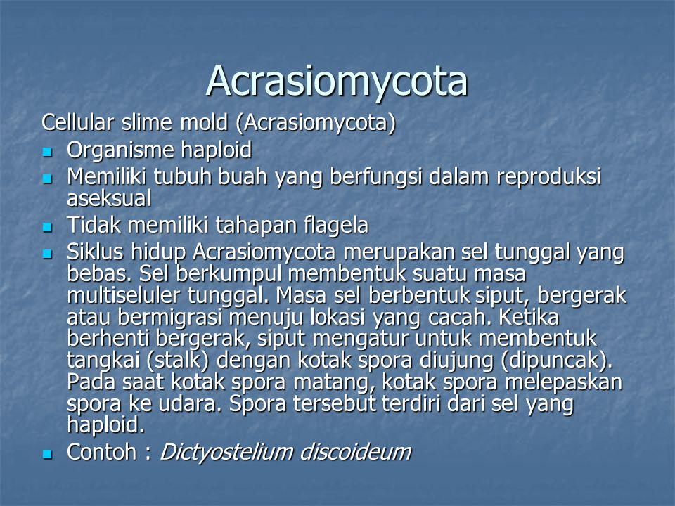 Acrasiomycota Cellular slime mold (Acrasiomycota) Organisme haploid Organisme haploid Memiliki tubuh buah yang berfungsi dalam reproduksi aseksual Mem