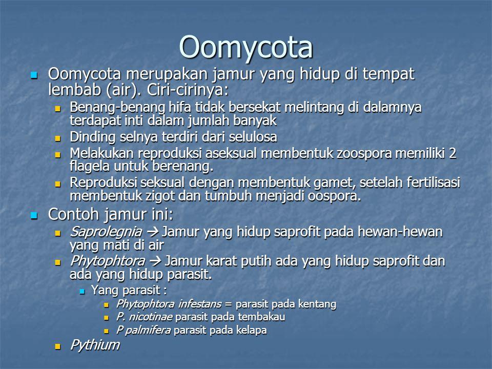 Oomycota Oomycota merupakan jamur yang hidup di tempat lembab (air). Ciri-cirinya: Oomycota merupakan jamur yang hidup di tempat lembab (air). Ciri-ci