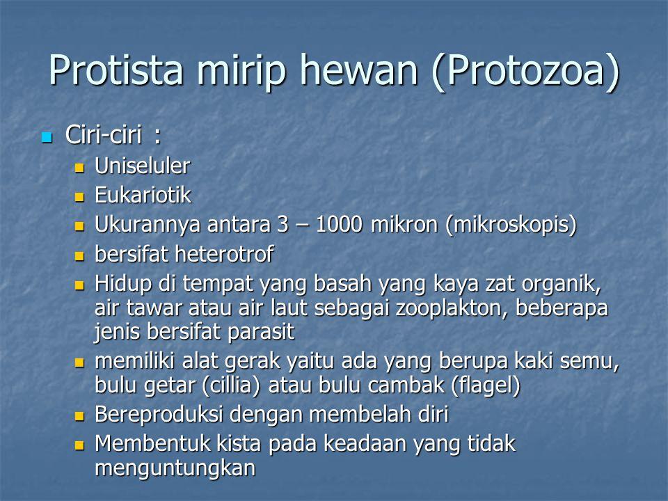 Protista mirip hewan (Protozoa) Ciri-ciri : Ciri-ciri : Uniseluler Uniseluler Eukariotik Eukariotik Ukurannya antara 3 – 1000 mikron (mikroskopis) Uku