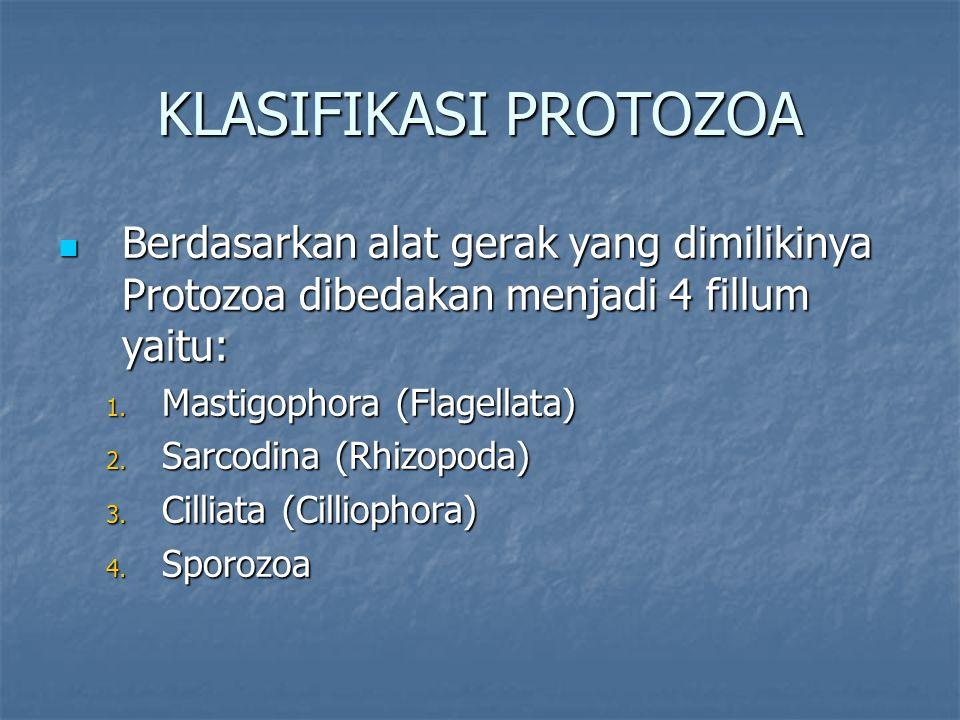 Berdasarkan alat gerak yang dimilikinya Protozoa dibedakan menjadi 4 fillum yaitu: Berdasarkan alat gerak yang dimilikinya Protozoa dibedakan menjadi