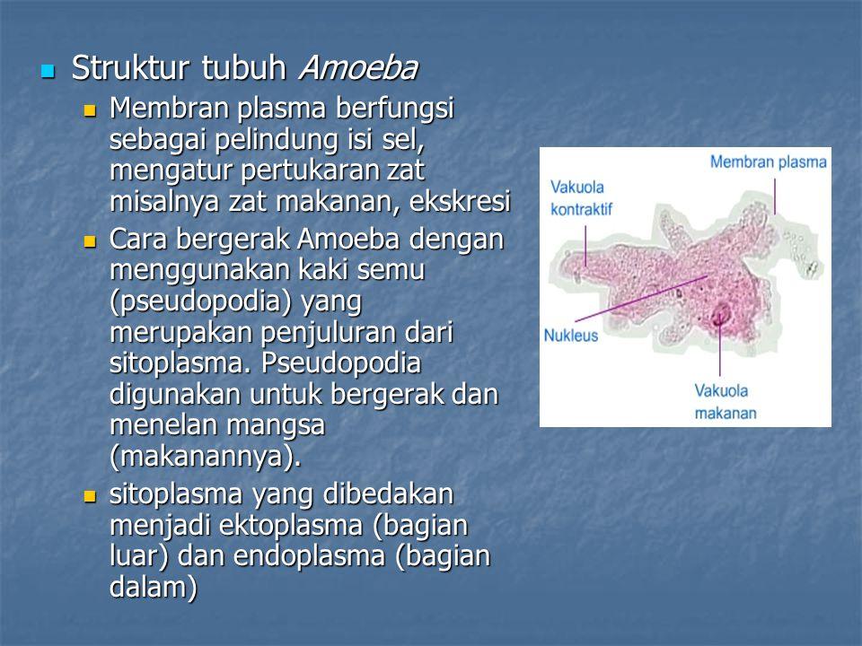 Struktur tubuh Amoeba Struktur tubuh Amoeba Membran plasma berfungsi sebagai pelindung isi sel, mengatur pertukaran zat misalnya zat makanan, ekskresi
