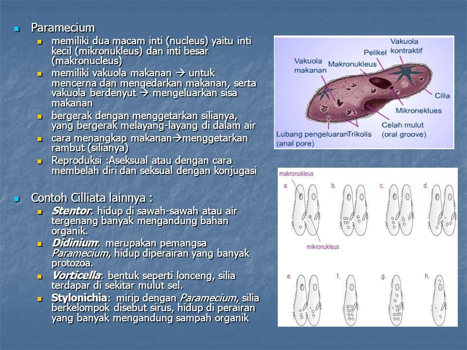 Paramecium Paramecium memiliki dua macam inti (nucleus) yaitu inti kecil (mikronukleus) dan inti besar (makronucleus) memiliki dua macam inti (nucleus