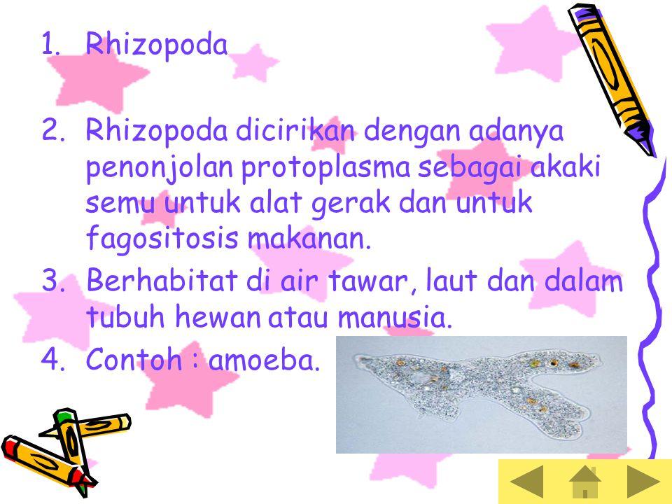 PROTISTA MIRIP HEWAN 1.Klasifikasi protozoa : 2.Rhizopada (berupa kaki semu) 3.Flagelata (berupa bulu cambuk) 4.Ciliata (berupa rambut getar) 5.Sporozoa (tidak memiliki alat gerak)