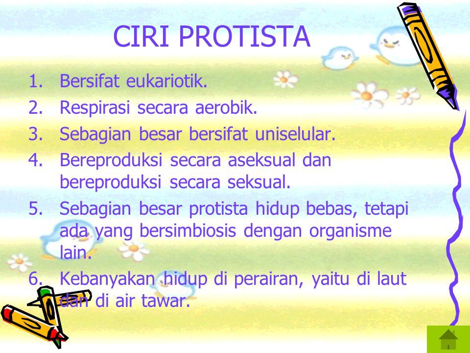 CIRI PROTISTA 1.Bersifat eukariotik.2.Respirasi secara aerobik.