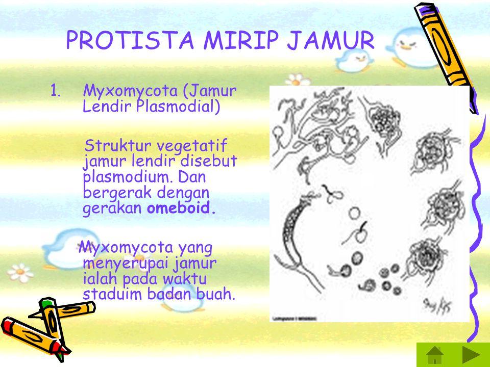 CIRI PROTISTA 1.Bersifat eukariotik. 2.Respirasi secara aerobik. 3.Sebagian besar bersifat uniselular. 4.Bereproduksi secara aseksual dan bereproduksi