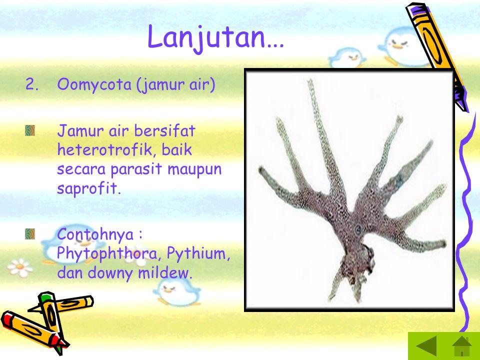 PROTISTA MIRIP JAMUR 1.Myxomycota (Jamur Lendir Plasmodial) Struktur vegetatif jamur lendir disebut plasmodium.