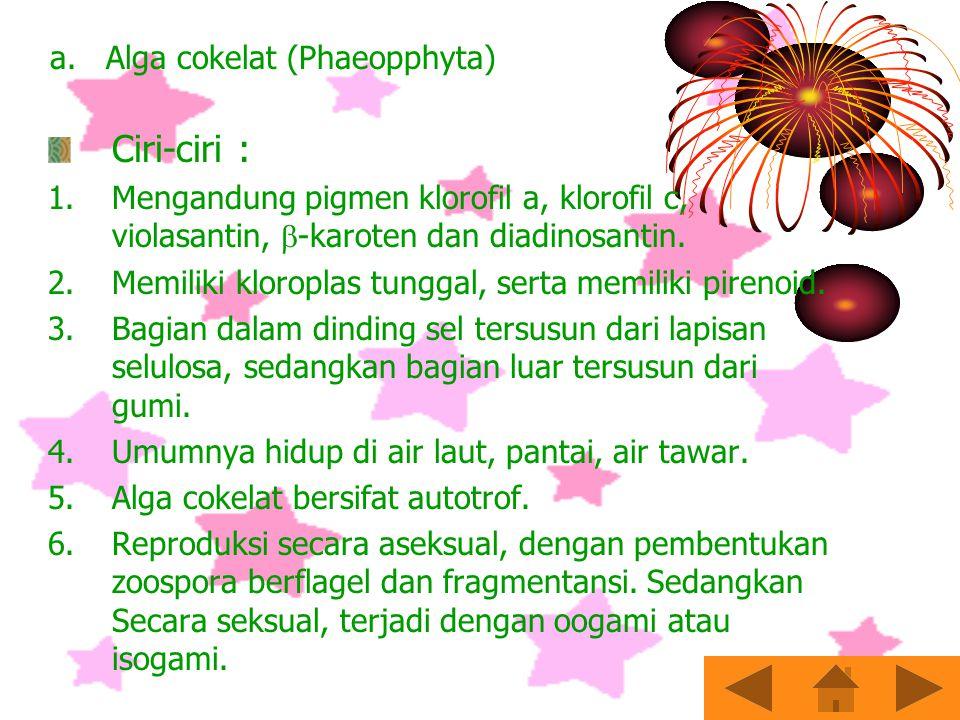 PROTISTA MIRIP TUMBUHAN Alga dapat diklasifikasikan menjadi 5 divisi yaitu: Alga cokelat Alga merah Alga keemasan Diatom Alga hijau Ilmu yang mempelajari alga disebut fikologi.