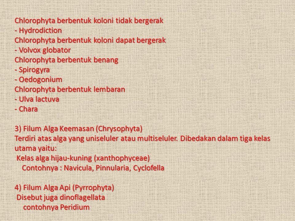 5) Filum Alga Coklat (Phaeophyta) Contohnya Sargassum muticum (gulma laut), Fucus serratus, Macrocystis pyrifera (alga raksasa), Turbinaria decurrens 6) Filum Alga Kemerahan (Rhodophyta) Contohnya : Carollina., Palmaria, Batrachospermum moniliforme, Gelidium (agar-agar), Gracilaria, Euchema (kosmetik), Scinaia furcellata Manfaat Alga Bagi Kehidupan Manusia' a.