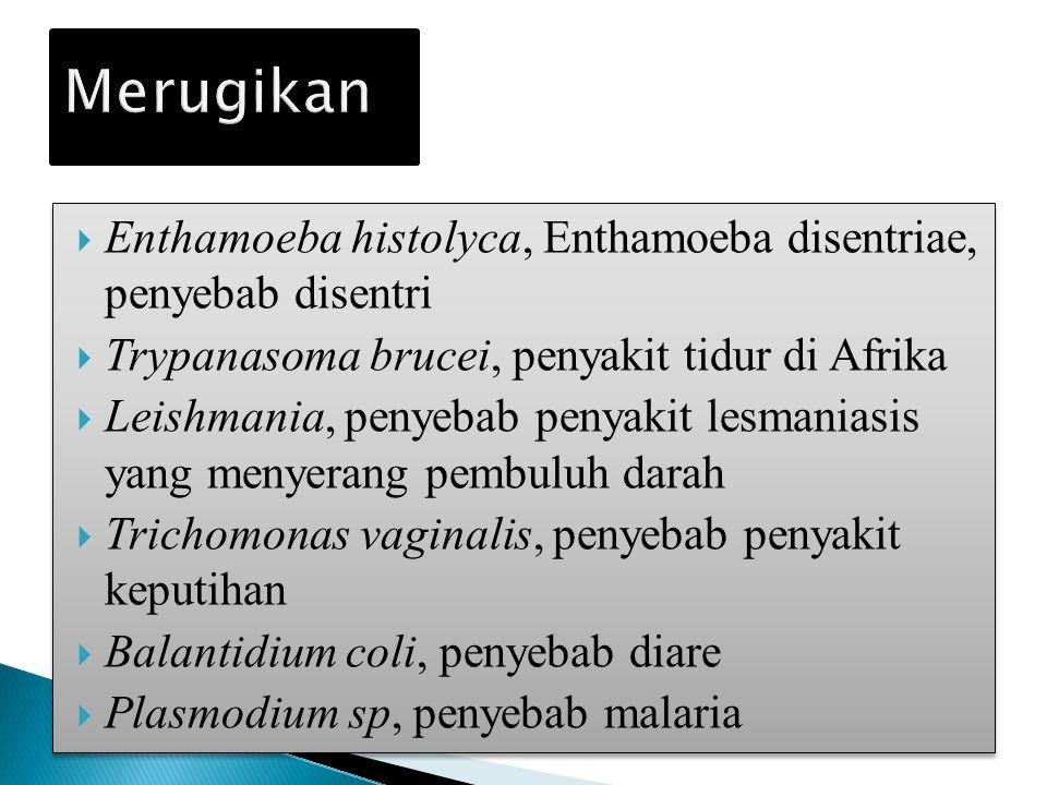  Enthamoeba histolyca, Enthamoeba disentriae, penyebab disentri  Trypanasoma brucei, penyakit tidur di Afrika  Leishmania, penyebab penyakit lesmaniasis yang menyerang pembuluh darah  Trichomonas vaginalis, penyebab penyakit keputihan  Balantidium coli, penyebab diare  Plasmodium sp, penyebab malaria  Enthamoeba histolyca, Enthamoeba disentriae, penyebab disentri  Trypanasoma brucei, penyakit tidur di Afrika  Leishmania, penyebab penyakit lesmaniasis yang menyerang pembuluh darah  Trichomonas vaginalis, penyebab penyakit keputihan  Balantidium coli, penyebab diare  Plasmodium sp, penyebab malaria