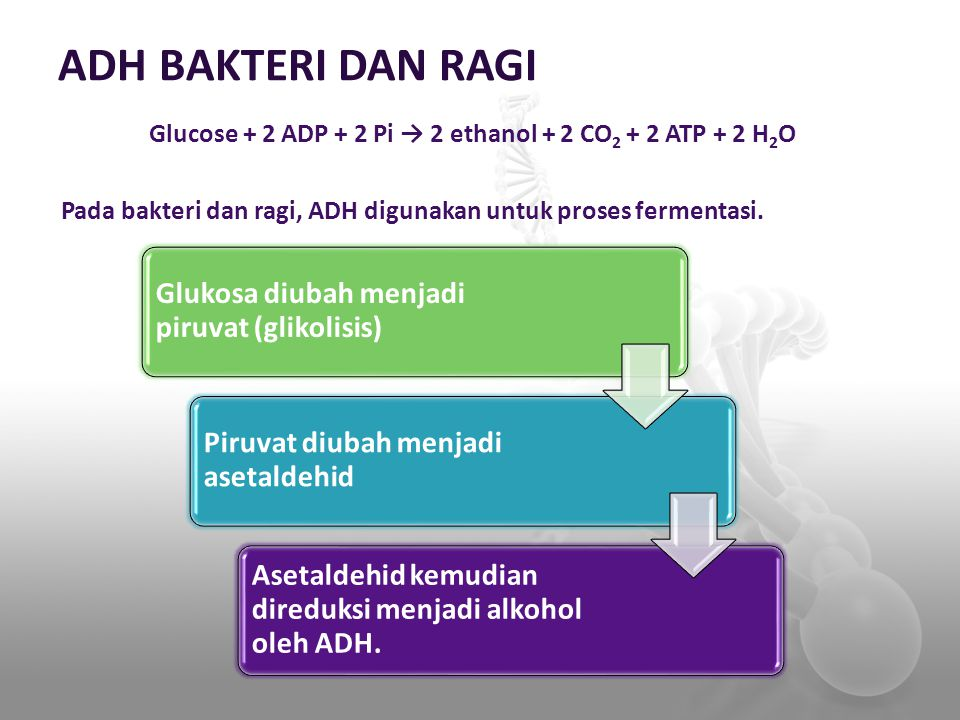 ADH BAKTERI DAN RAGI Glucose + 2 ADP + 2 Pi → 2 ethanol + 2 CO 2 + 2 ATP + 2 H 2 O Pada bakteri dan ragi, ADH digunakan untuk proses fermentasi. Gluko