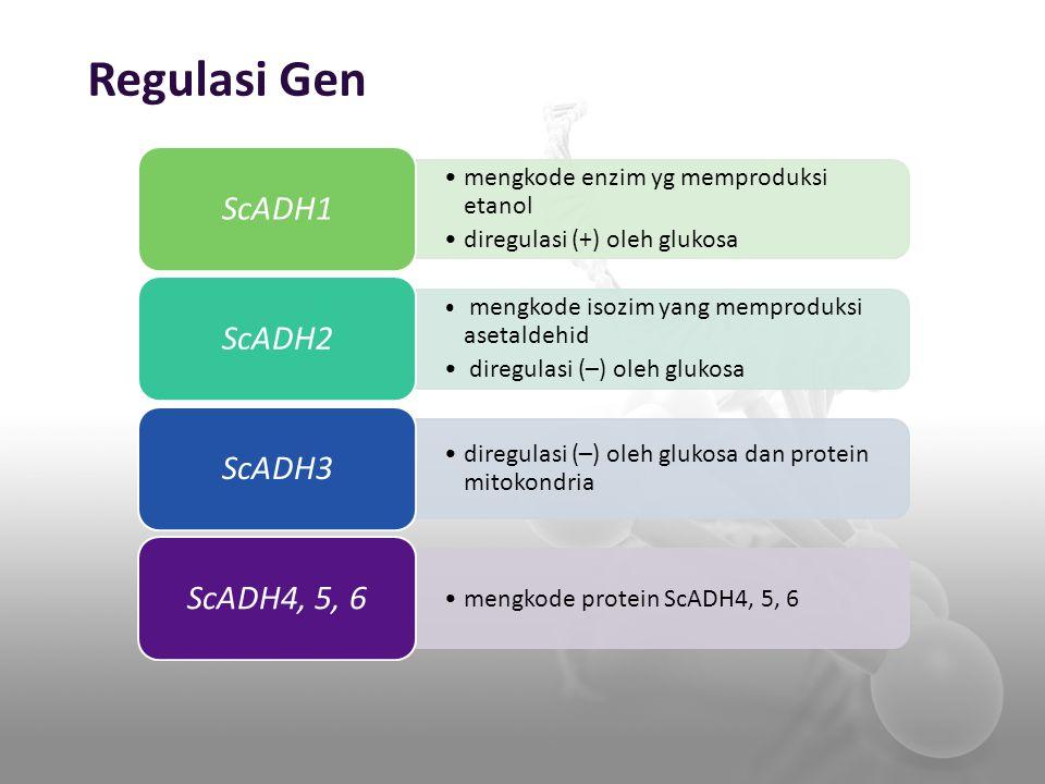 Regulasi Gen mengkode enzim yg memproduksi etanol diregulasi (+) oleh glukosa ScADH1 mengkode isozim yang memproduksi asetaldehid diregulasi (–) oleh