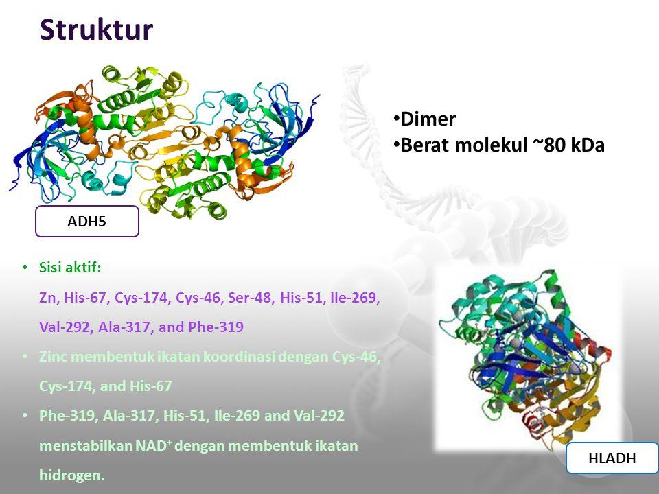 Struktur ADH5 HLADH Dimer Berat molekul ~80 kDa Sisi aktif: Zn, His-67, Cys-174, Cys-46, Ser-48, His-51, Ile-269, Val-292, Ala-317, and Phe-319 Zinc m