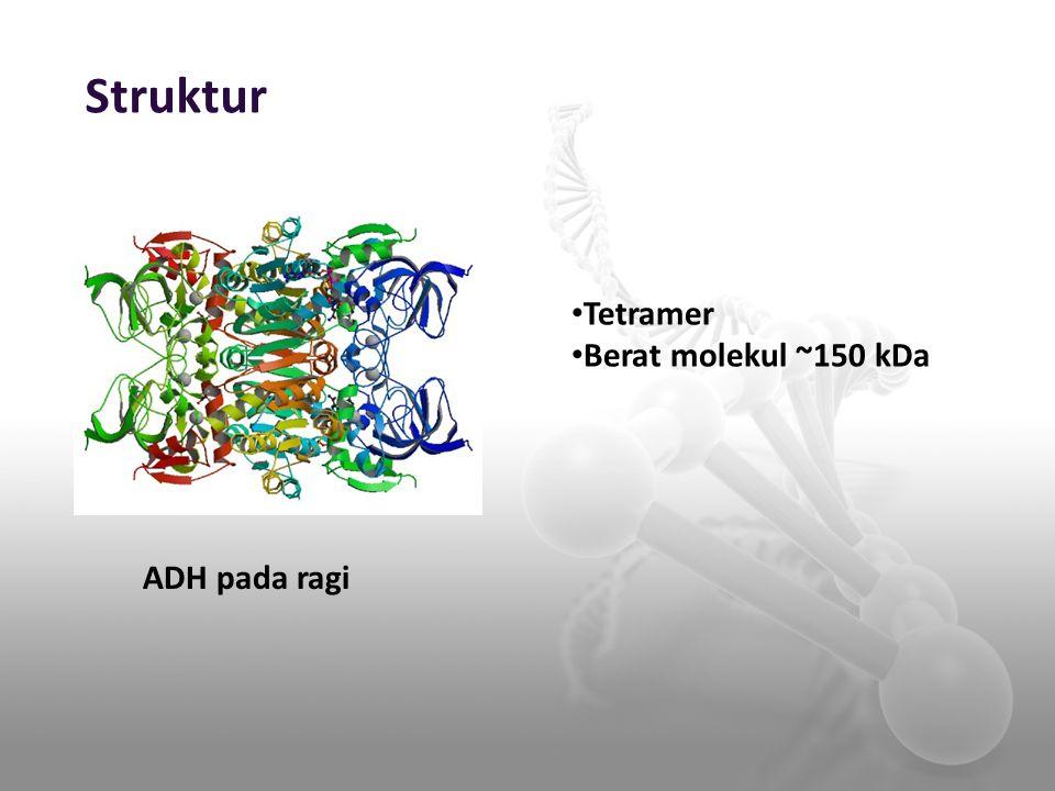 Struktur ADH pada ragi Tetramer Berat molekul ~150 kDa