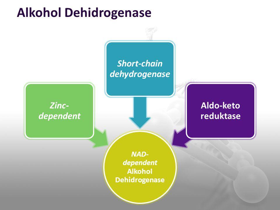 Alkohol Dehidrogenase NAD- dependent Alkohol Dehidrogenase Zinc- dependent Short-chain dehydrogenase Aldo-keto reduktase