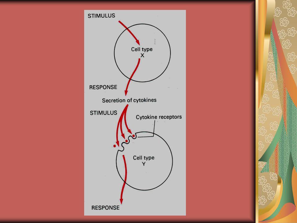 FUNGSI SITOKIN 1IMUNOREGULASI ▫MENURUNKAN/ SUPRESI/INHIBISI RESPON IMUN (IL-4, IL-10) ▫ MENINGKATKAN RESPON IMUN 2MEKANISME PERTAHANAN ▫ RESPON INFLAMASI ▫ RESPON THD PENYEMBUHAN JARINGAN RUSAK / PENYEMBUHAN LUKA 3HEMATOPOEISIS 4SBG TH/ DG TEKNIK REKOMBINAN DNA ▫ MERANGSANG SISTIM IMUN (DEF.IMUN, INFEKSI, TUMOR) ▫ ANTI SITOKIN (PENGONTROL PD PENY.AUTOIMUN)