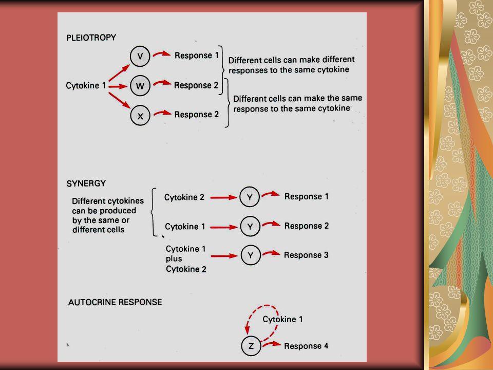 PENAMAAN SITOKIN 1.BERDASARKAN SEL YANG MEMPRODUKSI  LIMFOKIN : SITOKIN YG DIPRODUKSI LIMFOSIT  MONOKINE : SITOKIN YG DIPRODUKSI MONOSIT 2.BERDASARKAN MEKANISME PRODUKSI  INTERLEUKIN : MOLEKUL YANG BERFUNGSI UTK KOMUNIKASI LEUKOSIT (INTER+LEUCOCYTE): IL-1, IL-2, IL-3 DLL  INTERFERON (IFN) : MOLEKUL YANG DIPRODUKSI SEBAGAI RESPON INVASI VIRUS (VIRAL-INTERFERENCE): IFN- , ,   TUMOUR NECROSIS FACTORS (TNF) : MOLEKUL YANG MEMPUNYAI AKTIFITAS ATAU KEMAMPUAN MENYEBABKAN NEKROSIS PADA SEL YANG MENGALAMI TRANSFORMASI IN-VITRO/ IN- VIVO: TNF- , 