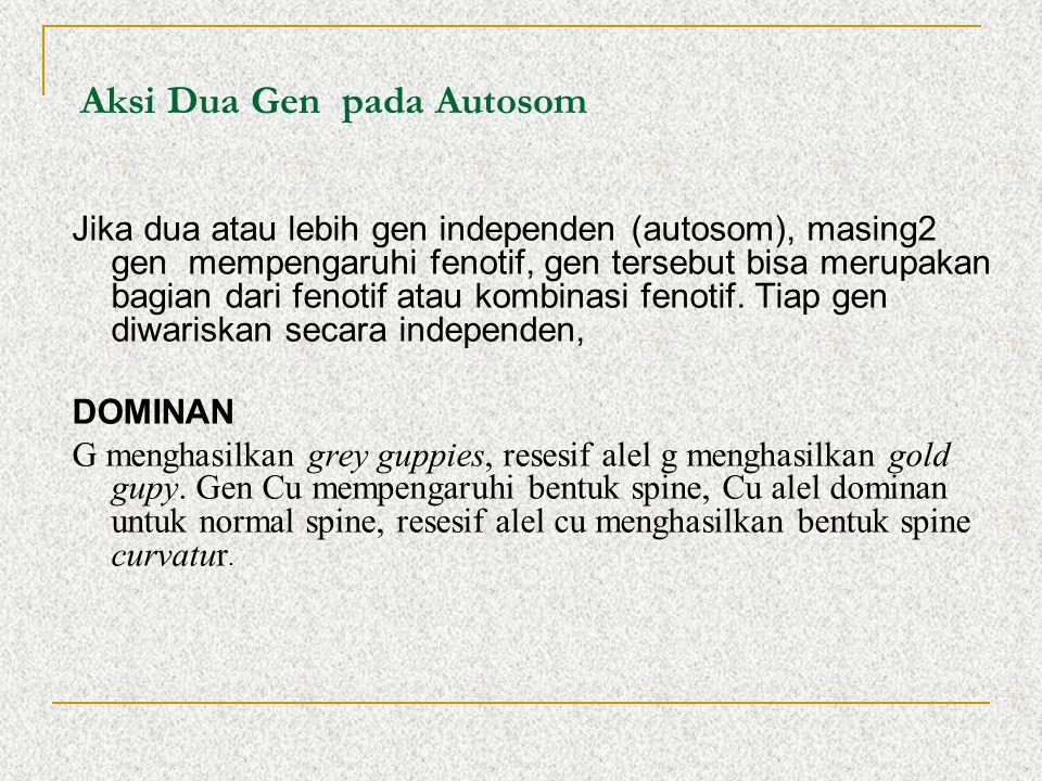 Aksi Dua Gen pada Autosom Jika dua atau lebih gen independen (autosom), masing2 gen mempengaruhi fenotif, gen tersebut bisa merupakan bagian dari feno