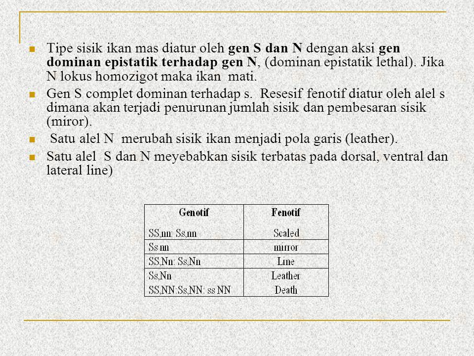 Tipe sisik ikan mas diatur oleh gen S dan N dengan aksi gen dominan epistatik terhadap gen N, (dominan epistatik lethal). Jika N lokus homozigot maka
