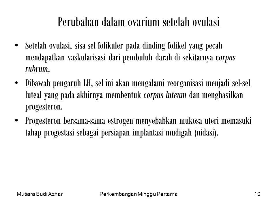 Mutiara Budi AzharPerkembangan Minggu Pertama10 Perubahan dalam ovarium setelah ovulasi Setelah ovulasi, sisa sel folikuler pada dinding folikel yang