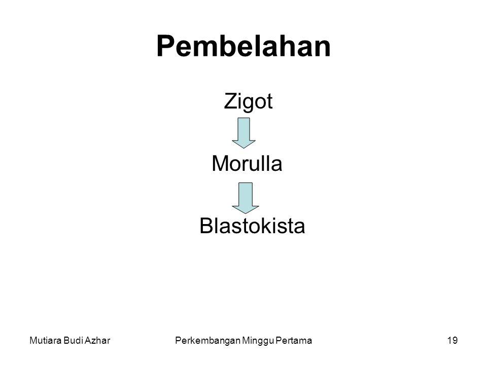 Mutiara Budi AzharPerkembangan Minggu Pertama19 Pembelahan Zigot Morulla Blastokista