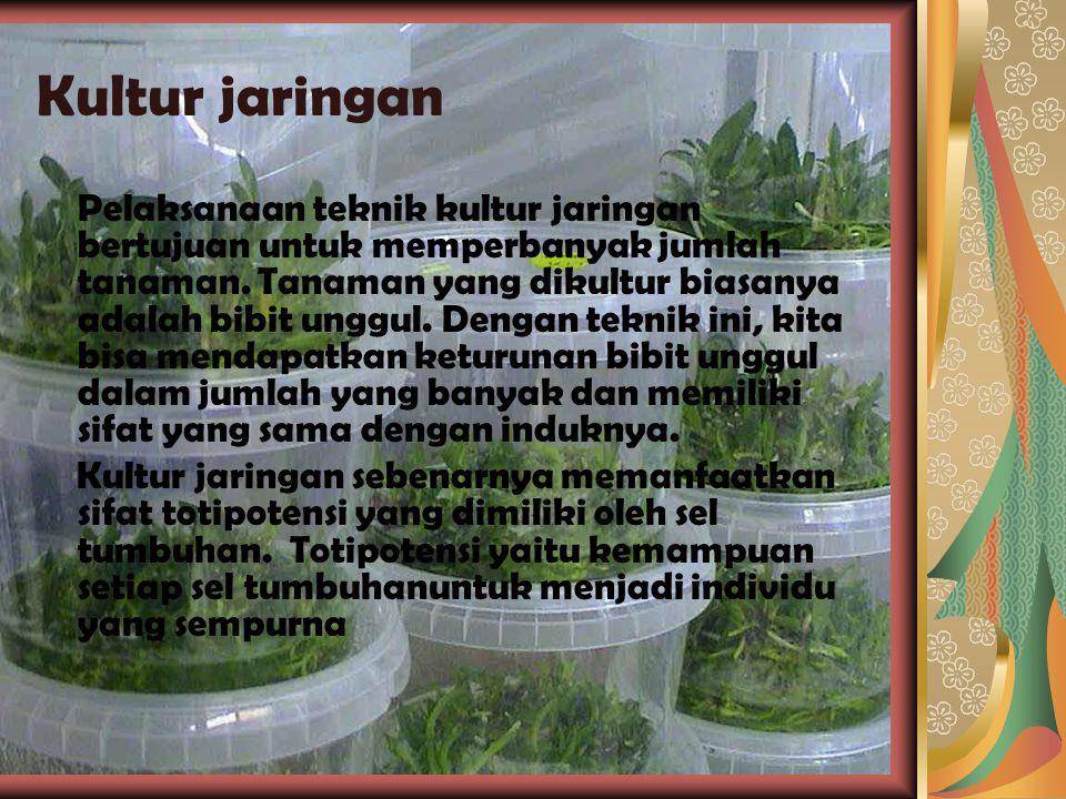 Bioteknologi bidang Pertanian