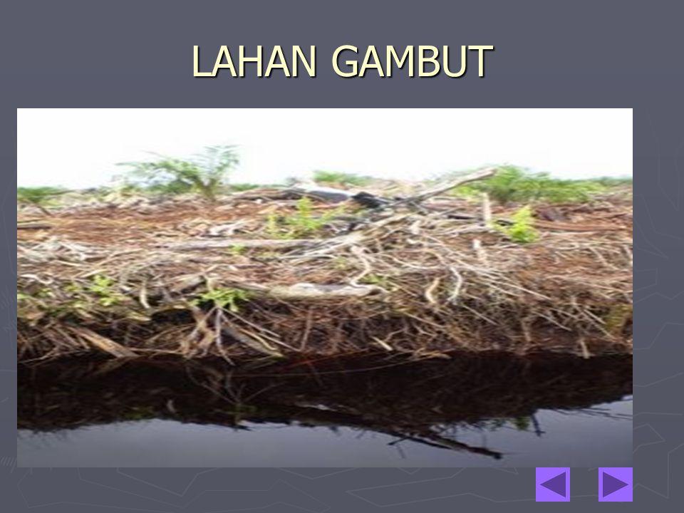 LAHAN GAMBUT
