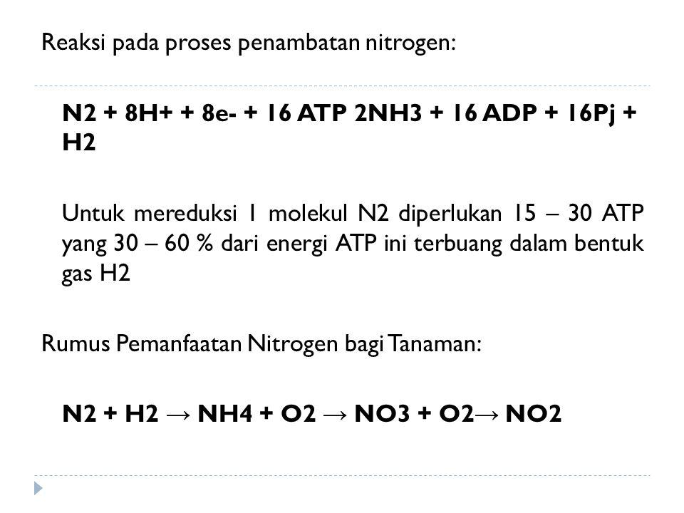 Reaksi pada proses penambatan nitrogen: N2 + 8H+ + 8e- + 16 ATP 2NH3 + 16 ADP + 16Pj + H2 Untuk mereduksi 1 molekul N2 diperlukan 15 – 30 ATP yang 30