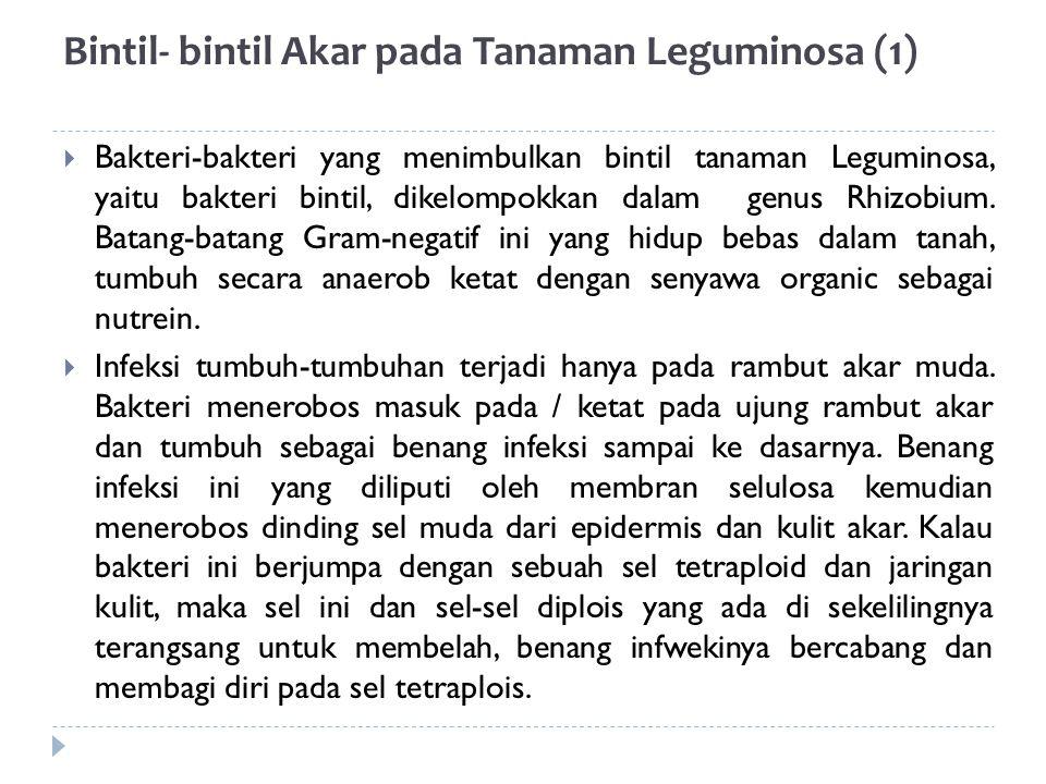(2)  Kelembaban Tanah sangat berperan dalam pembentukan bintil akar.