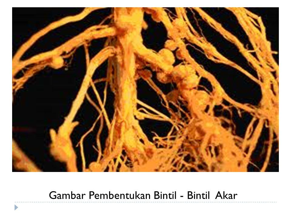 (5)  Ketersediaan Hara Lainnya  Ketersediaan fosfor (P) merupakan faktor penting dalam pembentukkan bintil dan pertumbuhan tanaman terutama pada tanah-tanah masam.