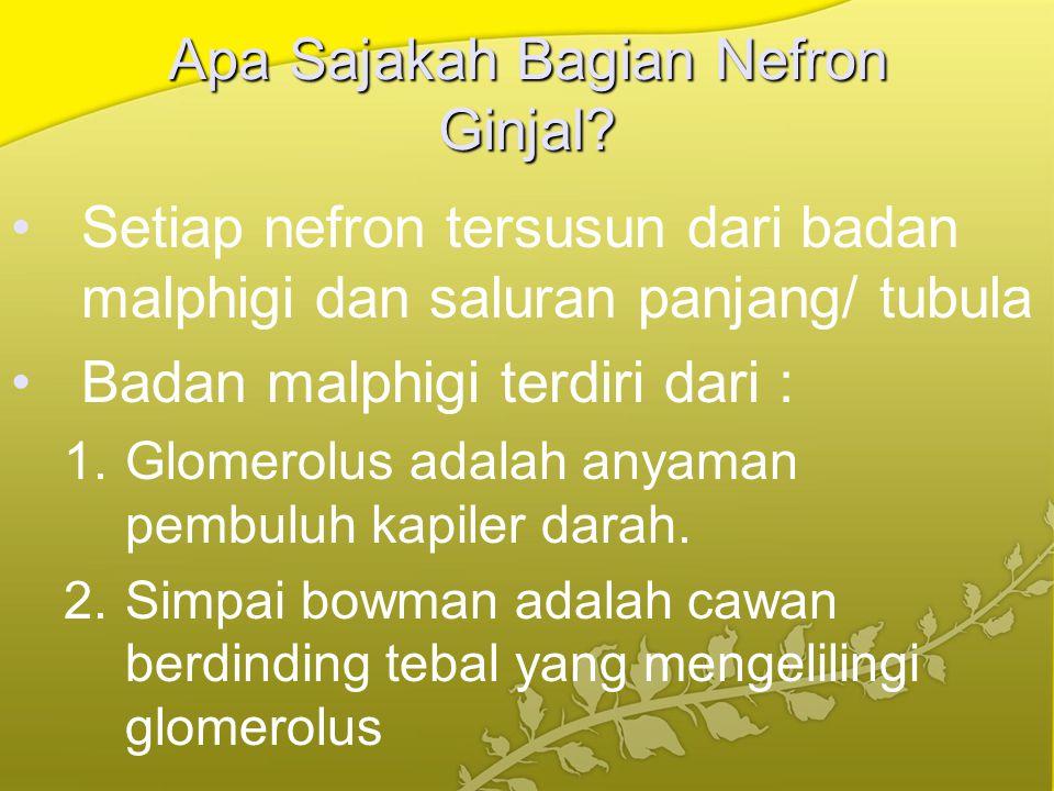 Apa Sajakah Bagian Nefron Ginjal? Setiap nefron tersusun dari badan malphigi dan saluran panjang/ tubula Badan malphigi terdiri dari : 1.Glomerolus ad