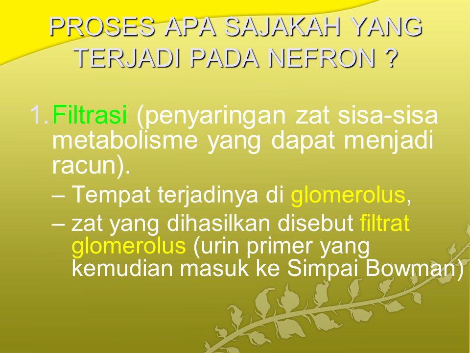 PROSES APA SAJAKAH YANG TERJADI PADA NEFRON ? 1.Filtrasi (penyaringan zat sisa-sisa metabolisme yang dapat menjadi racun). –Tempat terjadinya di glome