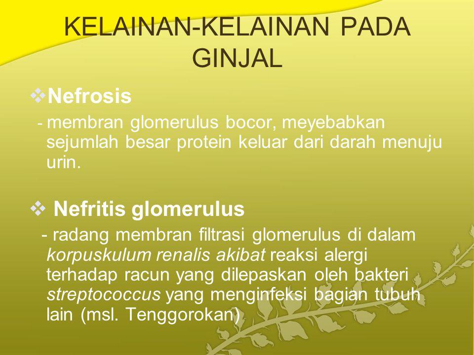 KELAINAN-KELAINAN PADA GINJAL  Nefrosis - membran glomerulus bocor, meyebabkan sejumlah besar protein keluar dari darah menuju urin.  Nefritis glome