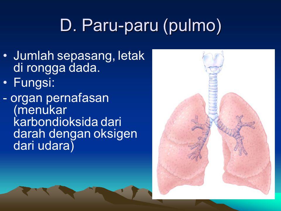 D. Paru-paru (pulmo) Jumlah sepasang, letak di rongga dada. Fungsi: - organ pernafasan (menukar karbondioksida dari darah dengan oksigen dari udara)