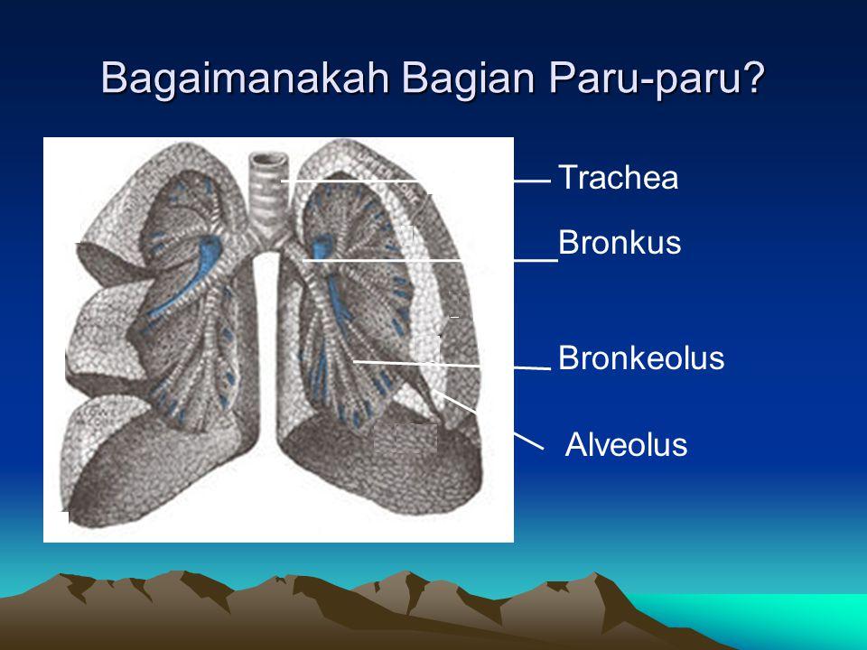 Gangguan Fungsi Paru-paru PenyakitTandaPenyebabMengatasi TBCBatuk darah, tubuh kurus (btk burung), alveolus berbintik-bintik kecil, lelah dan lemas, nafsu makan menurun, demam ringan, berkeringat pada malam hari Bakteri Mycobacterium tuberkolusis Pengobatan rutin dalam jangka 6 bl, 9 bl, karantina, vaksin BCG AsmaSesak napas disertai bunyi 'mengi' Alergi debu, serbuk bunga, dsb.
