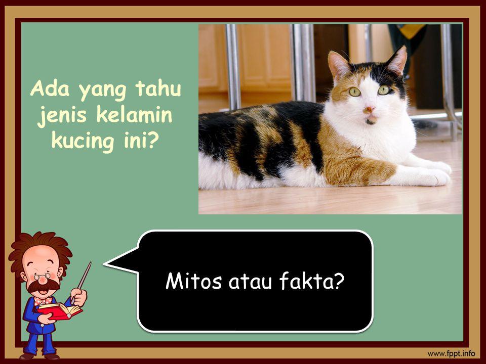 Konon katanya, kucing yang memiliki 3 warna rambut adalah betina Konon katanya, kucing yang memiliki 3 warna rambut adalah betina Ada yang tahu jenis