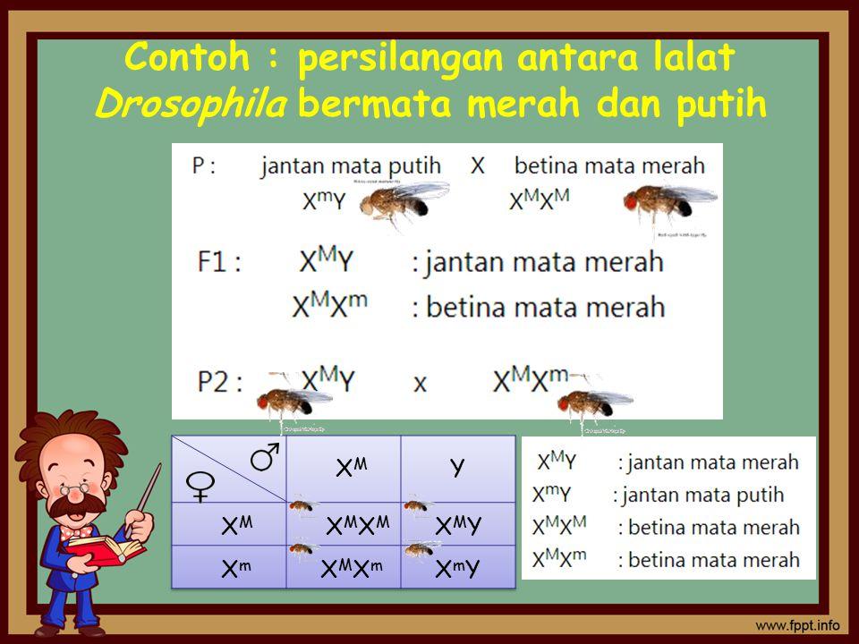 Contoh : persilangan antara lalat Drosophila bermata merah dan putih
