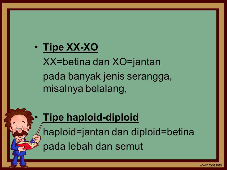 Tipe XX-XO XX=betina dan XO=jantan pada banyak jenis serangga, misalnya belalang, Tipe haploid-diploid haploid=jantan dan diploid=betina pada lebah dan semut
