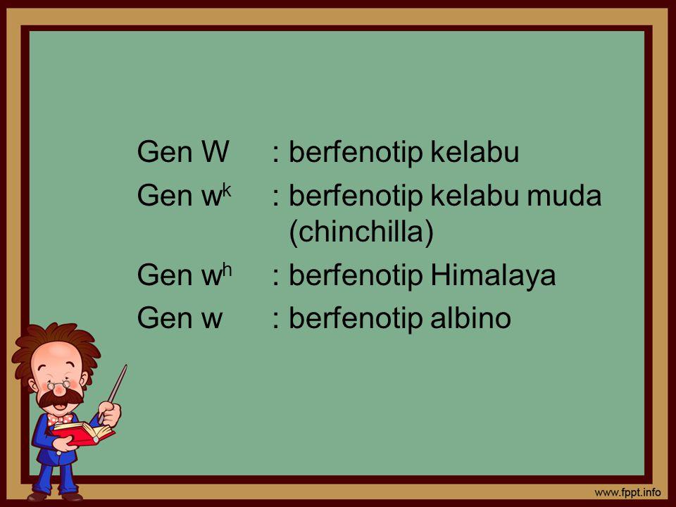 Gen W: berfenotip kelabu Gen w k : berfenotip kelabu muda (chinchilla) Gen w h : berfenotip Himalaya Gen w: berfenotip albino
