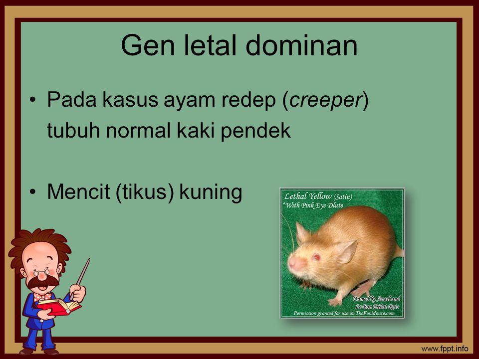 Gen letal dominan Pada kasus ayam redep (creeper) tubuh normal kaki pendek Mencit (tikus) kuning
