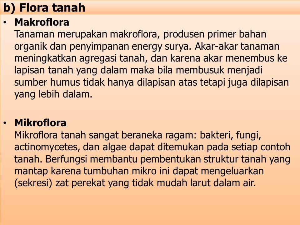 b) Flora tanah Makroflora Tanaman merupakan makroflora, produsen primer bahan organik dan penyimpanan energy surya. Akar-akar tanaman meningkatkan agr