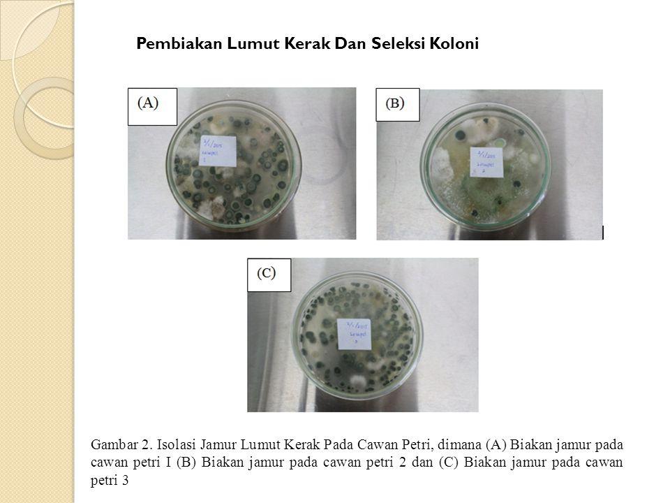 Pembiakan Lumut Kerak Dan Seleksi Koloni Gambar 2. Isolasi Jamur Lumut Kerak Pada Cawan Petri, dimana (A) Biakan jamur pada cawan petri I (B) Biakan j