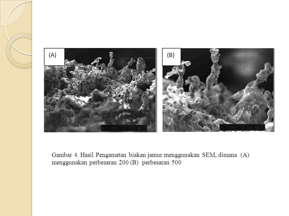 Gambar 4. Hasil Pengamatan biakan jamur menggunakan SEM, dimana (A) menggunakan perbesaran 200 (B) perbesaran 500